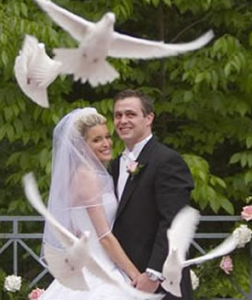 Wedding White Doves